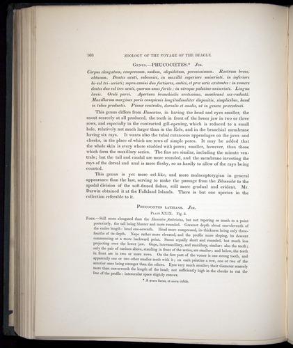 Image of Darwin-F8.3-1838-00168
