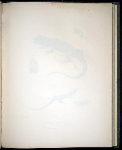 Image of Darwin-F8.3-1838-b00004-aaf01