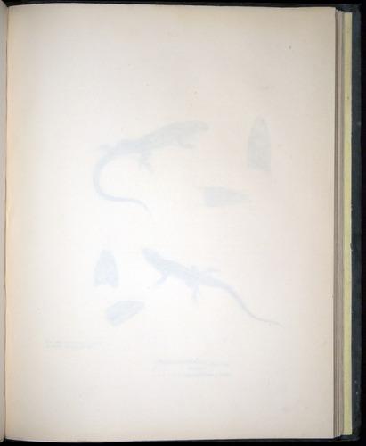 Image of Darwin-F8.3-1838-b00006-af03