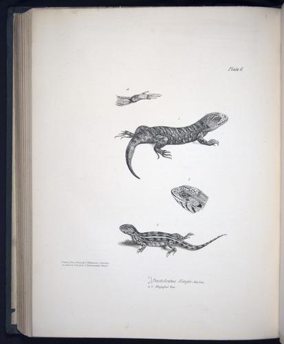 Image of Darwin-F8.3-1838-b00012-cf06