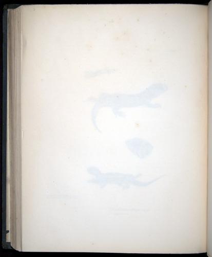 Image of Darwin-F8.3-1838-b00012-zf06