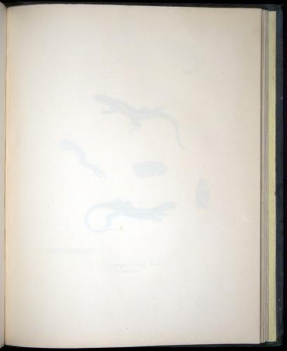 Image of Darwin-F8.3-1838-b00014-aaf07
