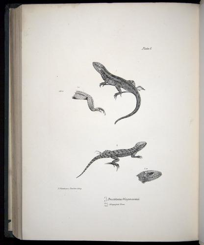 Image of Darwin-F8.3-1838-b00014-bbf08