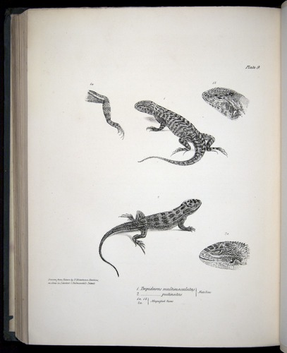Image of Darwin-F8.3-1838-b00016-cf09
