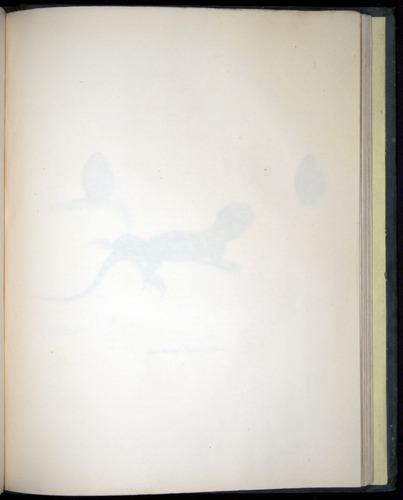 Image of Darwin-F8.3-1838-b00020-aaf10