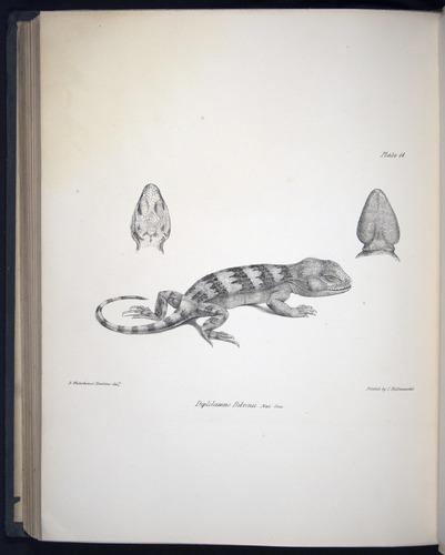 Image of Darwin-F8.3-1838-b00020-bf11