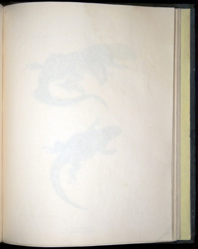 Image of Darwin-F8.3-1838-b00026-af14
