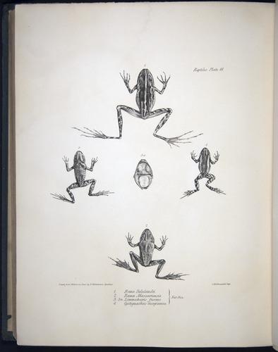 Image of Darwin-F8.3-1838-b00030-bf16