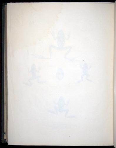 Image of Darwin-F8.3-1838-b00030-zf16