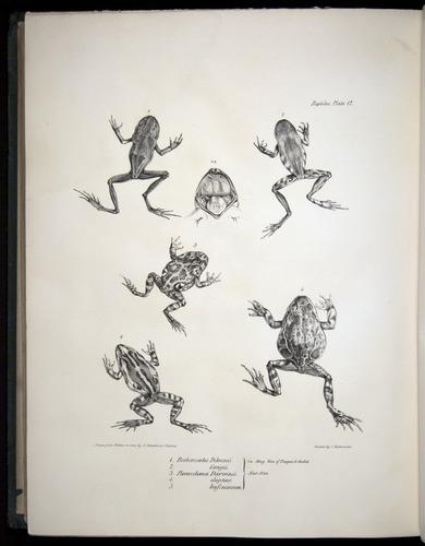 Image of Darwin-F8.3-1838-b00034-bf17