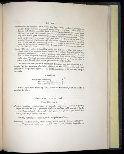 Image of Darwin-F8.3-1838-b00037