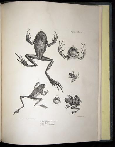 Image of Darwin-F8.3-1838-b00044-yf19