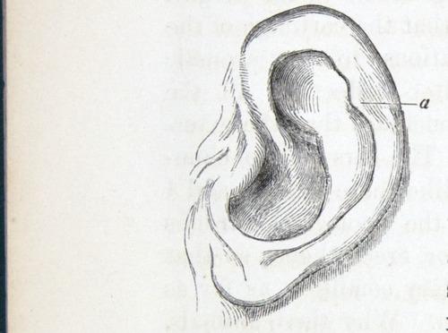 Image of Darwin-F937.1-1871-zzzz-det-022