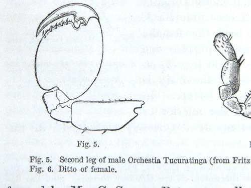 Image of Darwin-F937.1-1871-zzzz-det-330