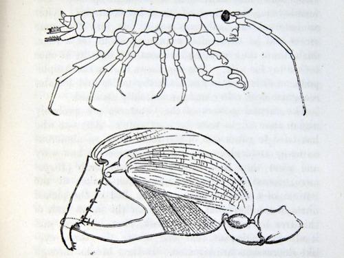 Image of Darwin-F937.1-1871-zzzz-det-333-1
