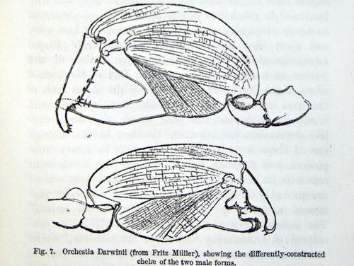 Image of Darwin-F937.1-1871-zzzz-det-333-2