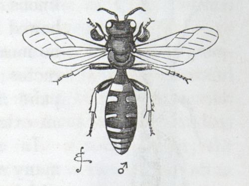 Image of Darwin-F937.1-1871-zzzz-det-343-1