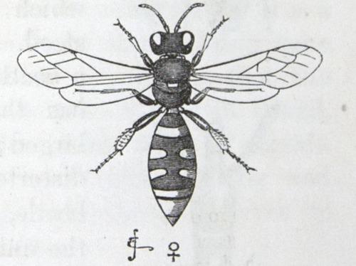 Image of Darwin-F937.1-1871-zzzz-det-343-2