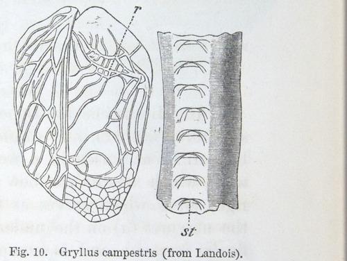 Image of Darwin-F937.1-1871-zzzz-det-353