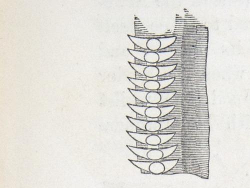 Image of Darwin-F937.1-1871-zzzz-det-354
