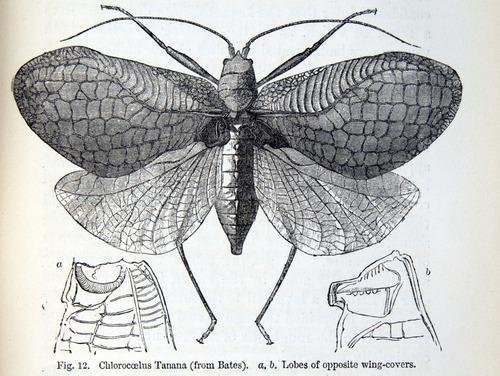Image of Darwin-F937.1-1871-zzzz-det-355