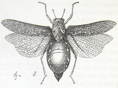 Image of Darwin-F937.1-1871-zzzz-det-358-1