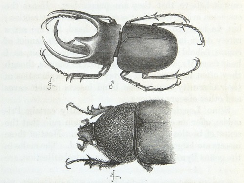 Image of Darwin-F937.1-1871-zzzz-det-368