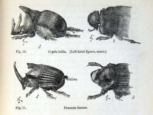 Image of Darwin-F937.1-1871-zzzz-det-369-1