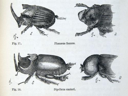 Image of Darwin-F937.1-1871-zzzz-det-369-2