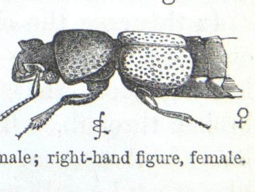Image of Darwin-F937.1-1871-zzzz-det-374