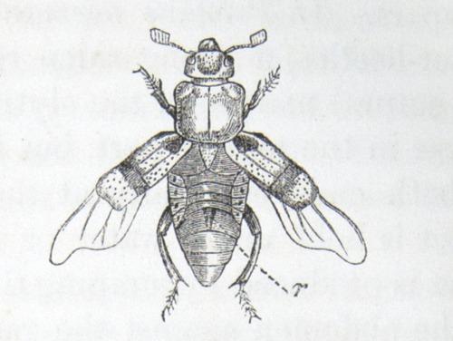 Image of Darwin-F937.1-1871-zzzz-det-379-1