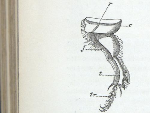 Image of Darwin-F937.1-1871-zzzz-det-380
