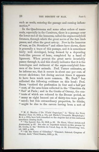 Image of Darwin-F937.1-1871-028