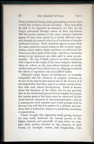 Image of Darwin-F937.1-1871-038