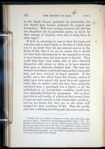 Image of Darwin-F937.1-1871-142