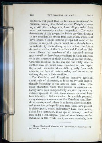 Image of Darwin-F937.1-1871-198