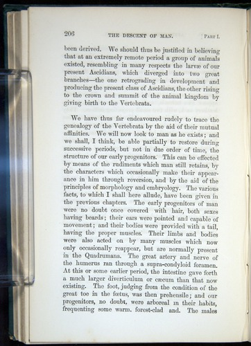 Image of Darwin-F937.1-1871-206