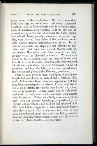 Image of Darwin-F937.1-1871-213