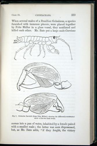 Image of Darwin-F937.1-1871-333
