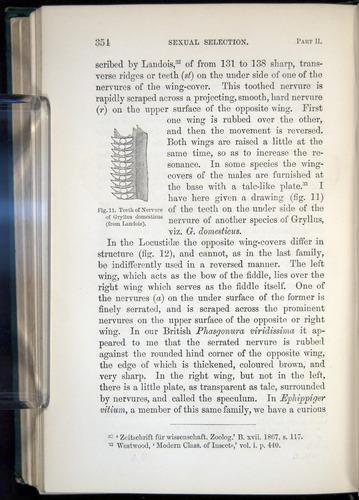 Image of Darwin-F937.1-1871-354