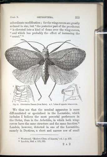 Image of Darwin-F937.1-1871-355