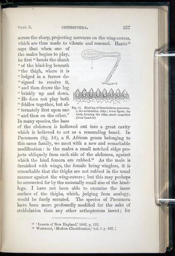Image of Darwin-F937.1-1871-357