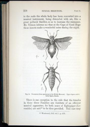 Image of Darwin-F937.1-1871-358