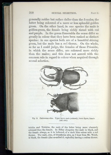 Image of Darwin-F937.1-1871-368
