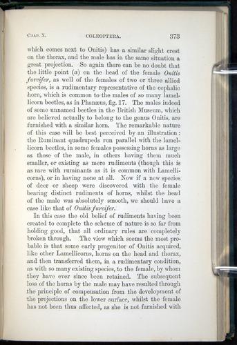 Image of Darwin-F937.1-1871-373