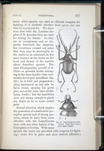 Image of Darwin-F937.1-1871-377