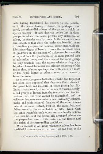 Image of Darwin-F937.1-1871-391