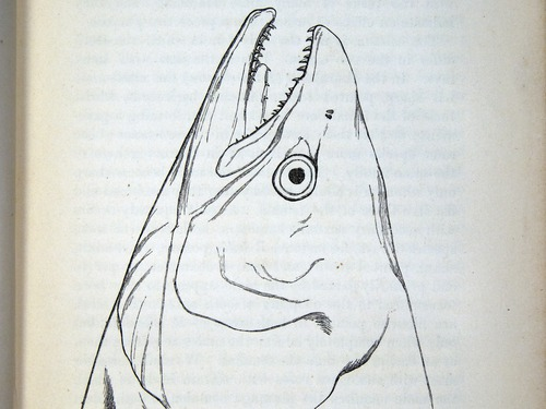 Image of Darwin-F937.2-1871-zzzz-det-005