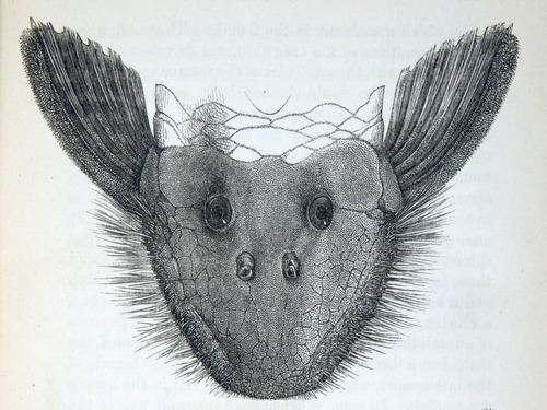 Image of Darwin-F937.2-1871-zzzz-det-011-1