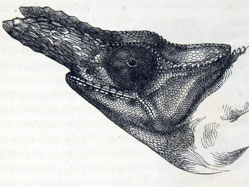 Image of Darwin-F937.2-1871-zzzz-det-035-1